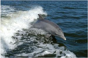 1 delfino salta