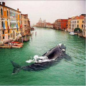 Balena in Canal Grande bis