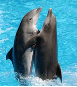 delfini danzano