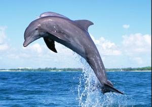 delfini saltano