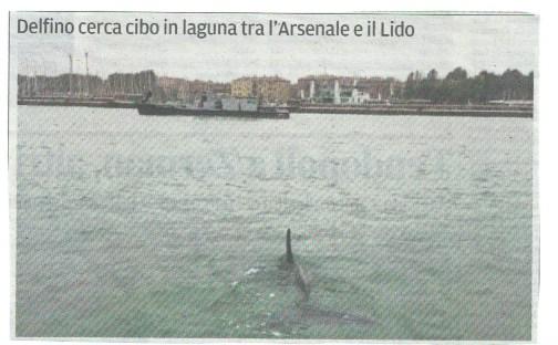 delfino in Canal Grande