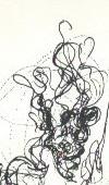 profilo a dx disegno