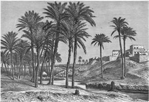 sefi-anal-1885